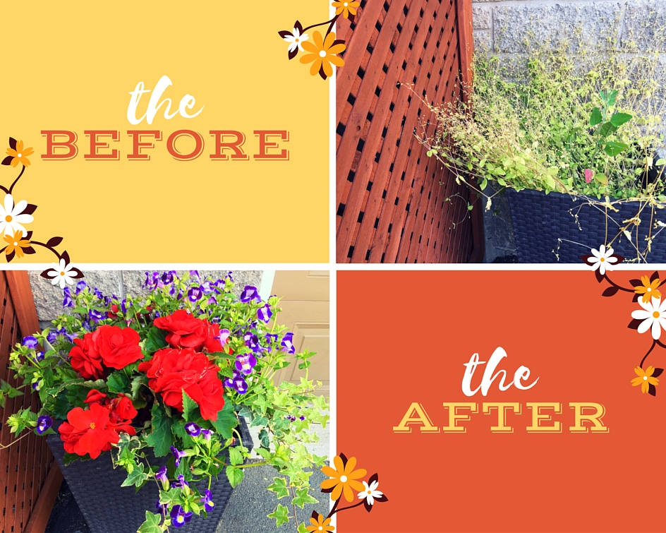before and after planter
